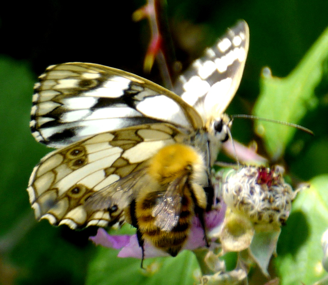 Butterfly - photo#50