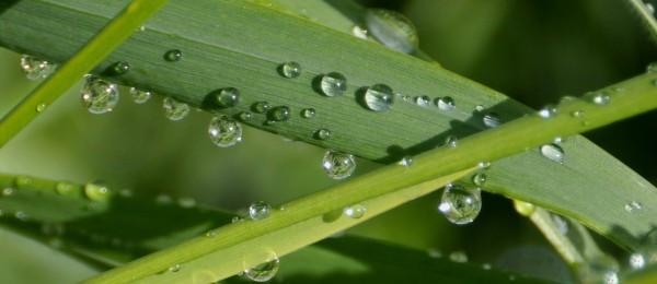 raindrops_grass_2