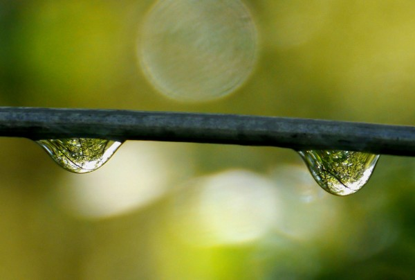 reflective raindrops