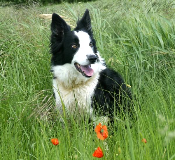 Blog the Dog