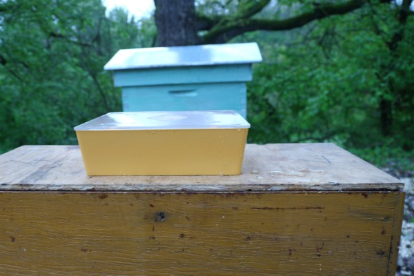 plastic feeder, filled with sugar solution which the bees can access from within the hive