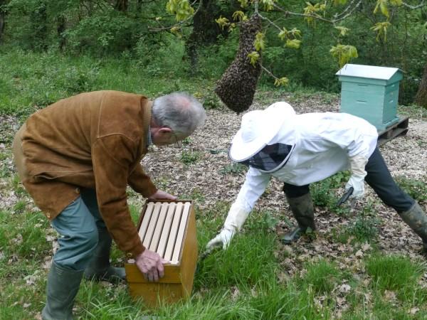 preparing the ruchette beneath the swarm