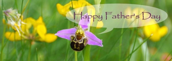 Bee Orchid with fathers day greeting
