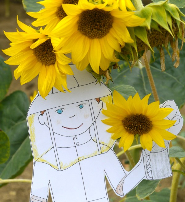 flat_stanley_sunflowers_2