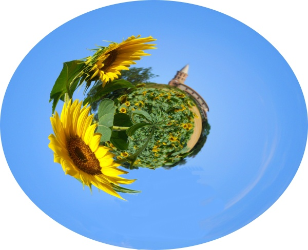 LW_garac_church_sunflowers_1