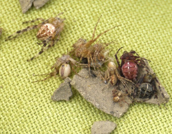 mudhut_b3_spiders
