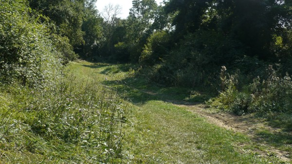 Blog's Gallop oak woodland on left, stream (hidden) on right